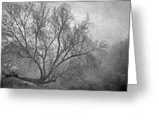 Morning In The Fog. M Greeting Card