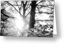 Morning In The Forest Greeting Card