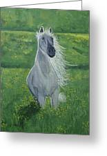 Morning In The Pasture Greeting Card