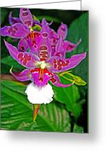 Morning Joy Orchid Greeting Card