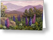 Morning Lupines Greeting Card