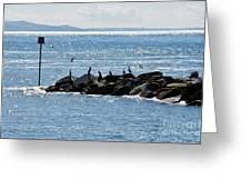Morning Meeting - Lyme Regis Greeting Card