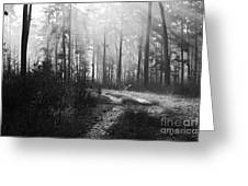 Morning Mist In Monochrome Greeting Card