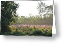 Morning Mist In The Pasture Greeting Card