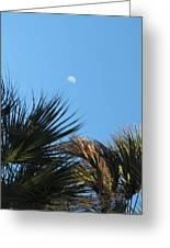 Morning Moon Over Palms Greeting Card