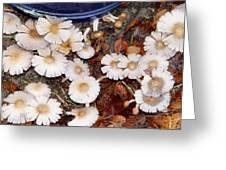 Morning Mushrooms Greeting Card