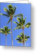 Morning Palms Greeting Card