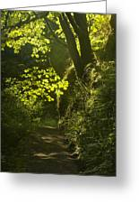 Morning Path Greeting Card by Andrew Soundarajan