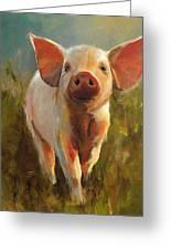Morning Pig Greeting Card