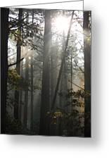 Morning Pines Greeting Card