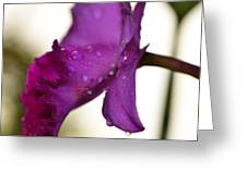Morning Rain - Orchid Photography By Sharon Cummings Greeting Card