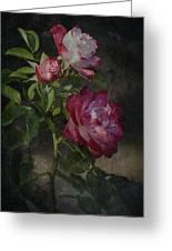Morning Roses Greeting Card