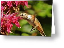 Morning Rufous Greeting Card