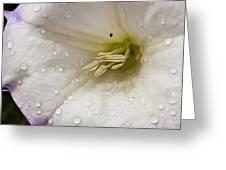 Morning Shower Greeting Card