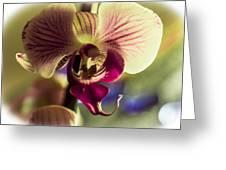 Morning Splender Greeting Card