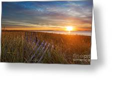 Morning Sun On The Dune Grasses Greeting Card