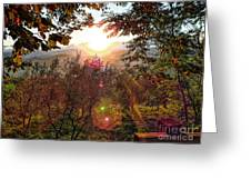 Morning Sunbeams Greeting Card