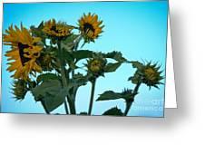 Morning Sunflowers Greeting Card