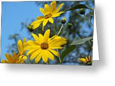 Morning Sunflowers Greeting Card