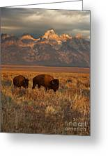 Morning Travels In Grand Teton Greeting Card