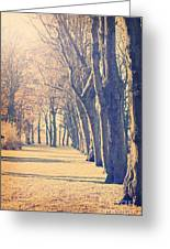 Morning Trees Greeting Card