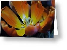 Morning Tulip Greeting Card
