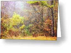 Landscape - Trees - Morning Walk In The Woods Greeting Card