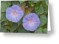 Morning's Glory Greeting Card
