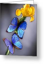 Morpho On Yellow Iris Greeting Card