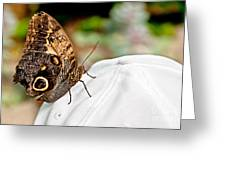 Morphos Butterfly On White Baseball Cap Art Prints Greeting Card