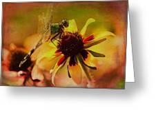 Mosquito Hawk Greeting Card