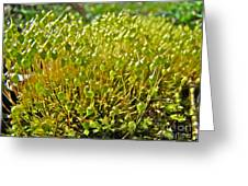 Moss And Fruiting Bodies - Green Lane Pa Greeting Card