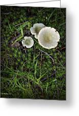 Moss And Fungi Greeting Card