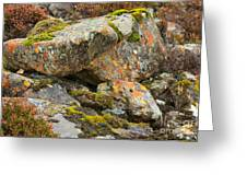 Moss And Lichens In The Scottish Highlands Greeting Card