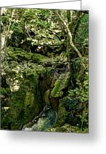 Moss And Stones By The Turquoise Forest Pond On A Summer Day No4 Greeting Card