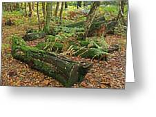 Moss Covered Logs On The Forest Floor Greeting Card