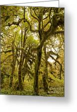 Moss-covered Maple Grove Greeting Card