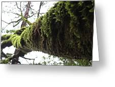 Moss Covered Tree Greeting Card