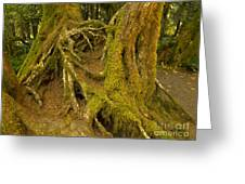 Moss-covered Tree Trunks  Greeting Card