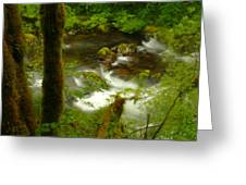 Moss Covered Trees Foregound Eagle Creek Greeting Card
