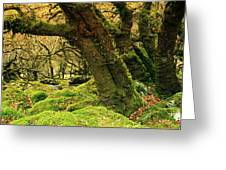 Moss Covered Trees In A Forest Greeting Card