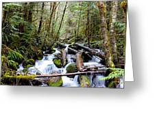 Moss Creek Greeting Card