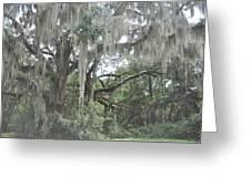 Moss Draped Live Oaks Greeting Card