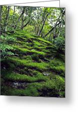 Moss Forest In Kyoto Japan Greeting Card