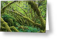Moss Grows On Vine Maple Trees  Acer Greeting Card