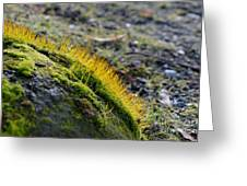 Moss In The Light Greeting Card