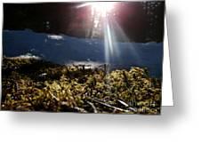 Moss In The Sunlight Greeting Card by Steven Valkenberg