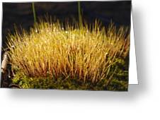 Moss Mat Greeting Card