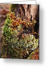 Moss On A Tree Greeting Card