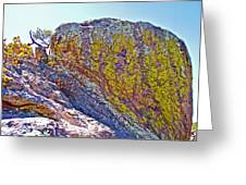 Moss On Giant Rocks Along Echo Canyon Trail In Chiricahua National Monument-arizona  Greeting Card